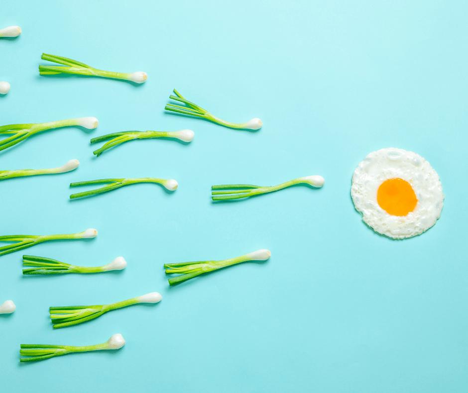Alimentazione e fertilità femminile